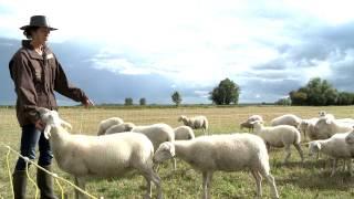 La ferme d'Alice - Elevage de brebis en agriculture biologique