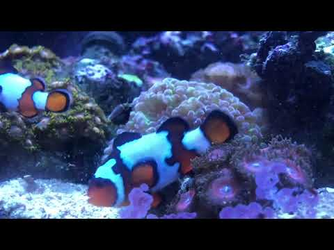 10 Tips To Get Clownfish To Spawn