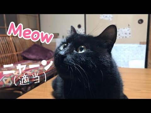 猫に適当にあしらわれるも鳴き声が可愛すぎて悪い気がしない Cat's halfhearted reply - YouTube