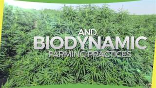 Hemp Farms in Colorado: 100% Traceability & Transparency...That's Natural!