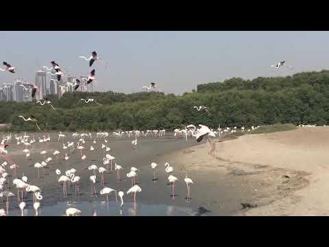 Flamingos at Ras Al Khor Bird Sanctuary Dubai