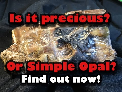 Cutting Open Ultra Rare Black Opal Wood from Virgin Valley Nevada