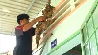 """Chuyện lạ Việt Nam - Lạ lùng tục treo tổ ong """"trấn yểm"""" cửa nhà"""