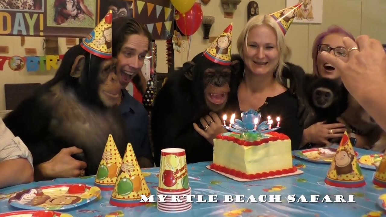 Vali the Chimpanzees 6th Birthday Myrtle Beach Safari Part 1