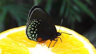 Schmetterlingsfarm Trassenheide auf Usedom - Exotische Schmetterlinge ganz nah erleben