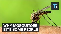 Why mosquitoes bite some people
