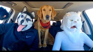 Cat Surprises Dogs with Dancing Car Ride!