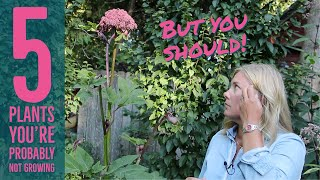 5 plants you probably don't grow but should | The Impatient Gardener
