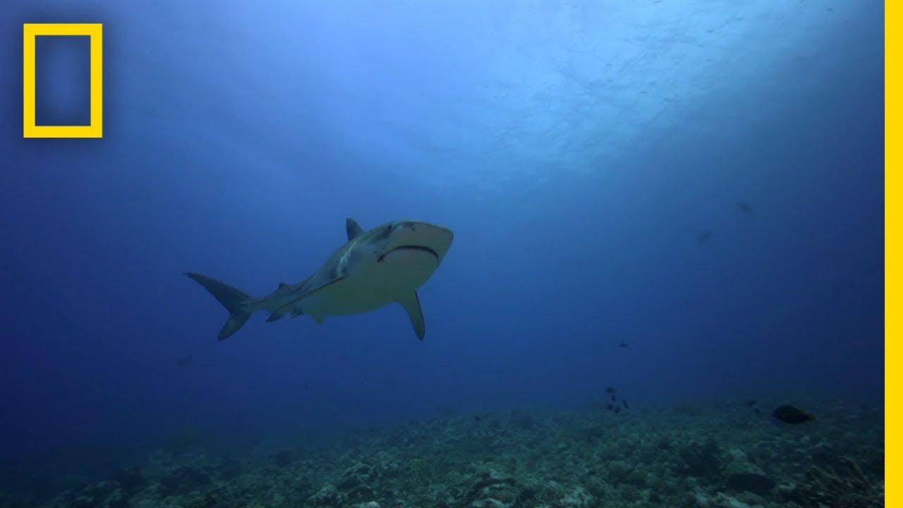 The Jersey Shore Shark Attacks | SharkFest