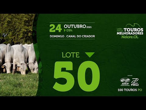 LOTE 50 - LEILÃO VIRTUAL DE TOUROS MELHORADORES  - NELORE OL - PO 2021