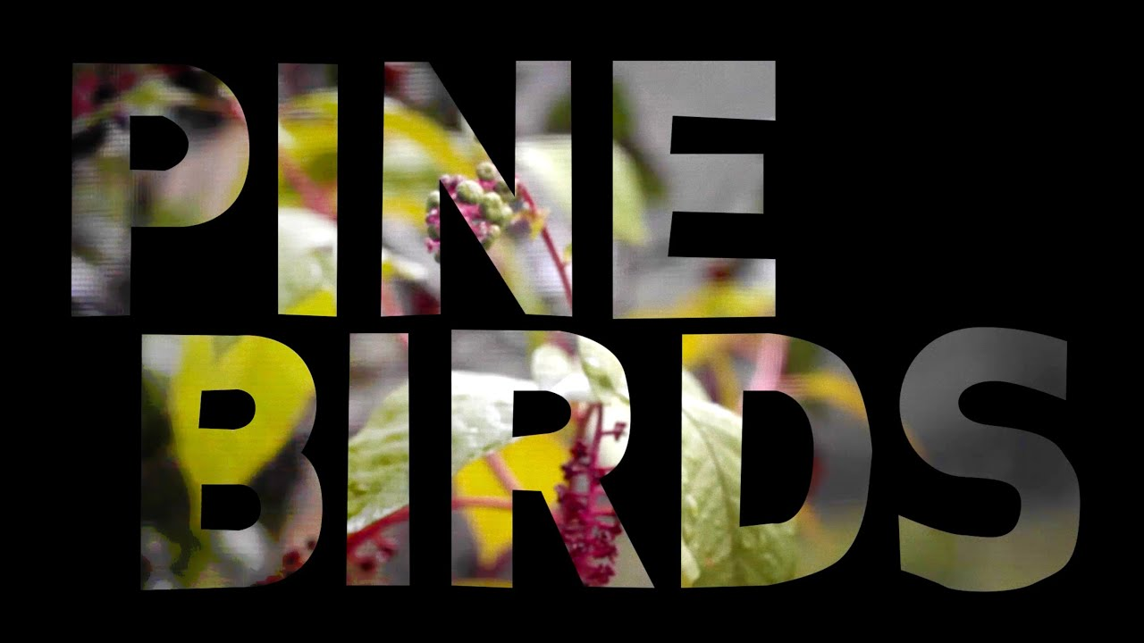 Intro to Pine Birds - by Fredo Viola