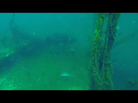 DEEPWATER MAFIA Goliath Grouper 6 9 17