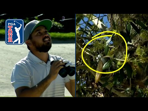 Jason Day's tree shot leads to trouble at Arnold Palmer Invitational