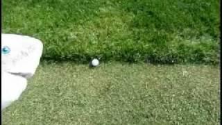 Eagle Eye Golf Club at Hawk Hollow - East Lansing, Michigan