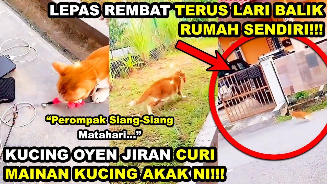 Download Kucing Jiran KING OYEN CURI MAINAN Kucing Akak | Lepas Rembat Terus LARI BALIK RUMAH SENDIRI!!!