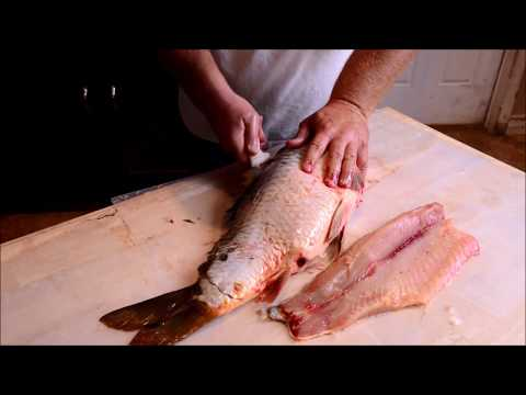 Cleaning Fleecing and Scoring a Common Carp