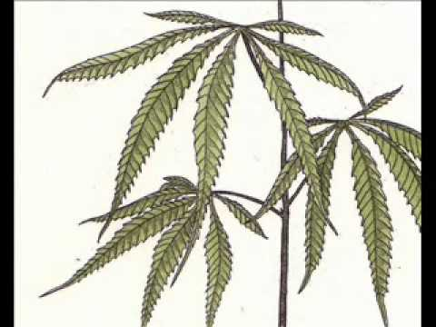 Trialogue #17: Cannabis Trialogue (Terence McKenna, R. Sheldrake, R. Abraham) [FULL]