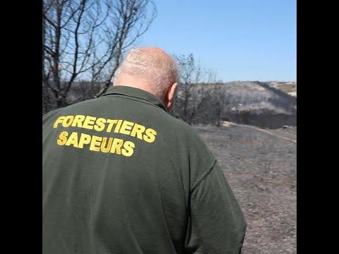 Les forestiers sapeurs combattent l'incendie