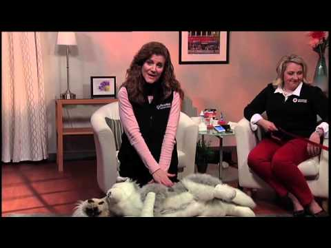 American Red Cross Pet First Aid app, CPR on dogs and cats and Pet First Aid Kit Must Haves