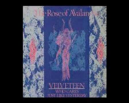 The Rose of Avalanche - Veleveteen