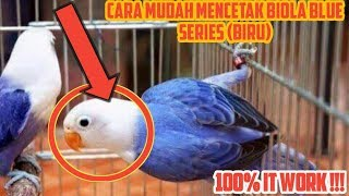 Video Cara Mudah Mencetak Lovebird Biola Blue Series (Biru) download MP3, 3GP, MP4, WEBM, AVI, FLV Juli 2018