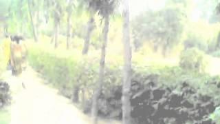 Virndavan Dwarikadhish ka Bagicha