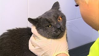 Снюсы наносит вред не только человеку, но и кошкам  СТС-МИР.