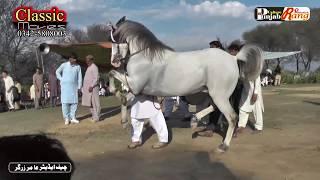 Horse Maharaja / 2nd Day All Pakistan Horse Dance Khari Rajgan Azad Kashmeer / 68