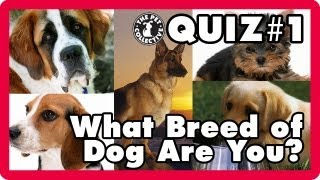 What Breed of Dog Are You? (Video Quiz)