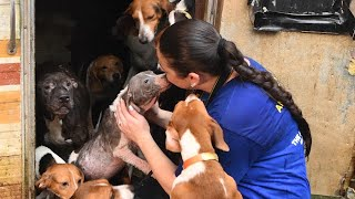 Nearly 150 dogs rescued in Florida