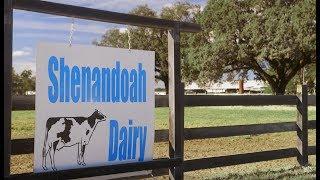 Tour a Florida Dairy Farm