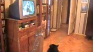Коты и Морозко.wmv
