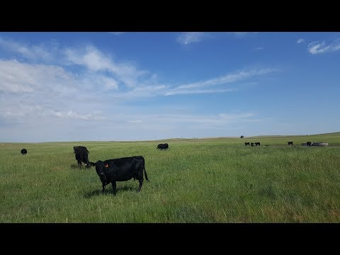 Nebraska Land For Sale | Garden County Range and Creek | Lewellen, NE