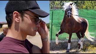 Download HORSE SHOPPING FOR A BEAUTIFUL STALLION Mp3 and Videos