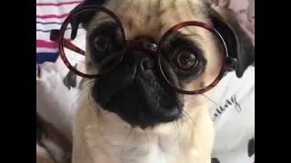 Ну очень смешные собаки! Подборка видео приколов про собак и щенков