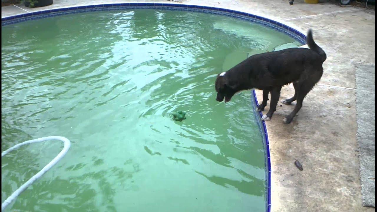 how to stop debris falling in my pool