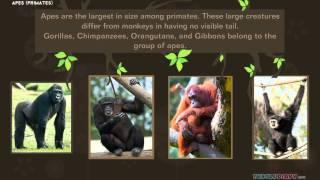 Animal Videos for Kids: Primates