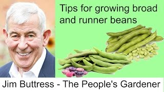 Jim Buttress Broad and Runner Beans
