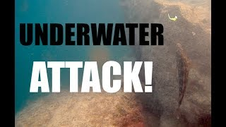 INCREDIBLE! Big Wrasse LIVE UNDERWATER ATTACK! Light Rock Fishing Adriatic Sea