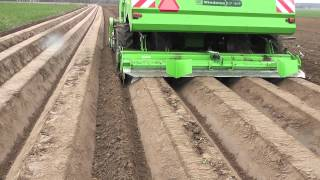 Miedema potato planting - Sadzarka do ziemniaków Miedema cz.1