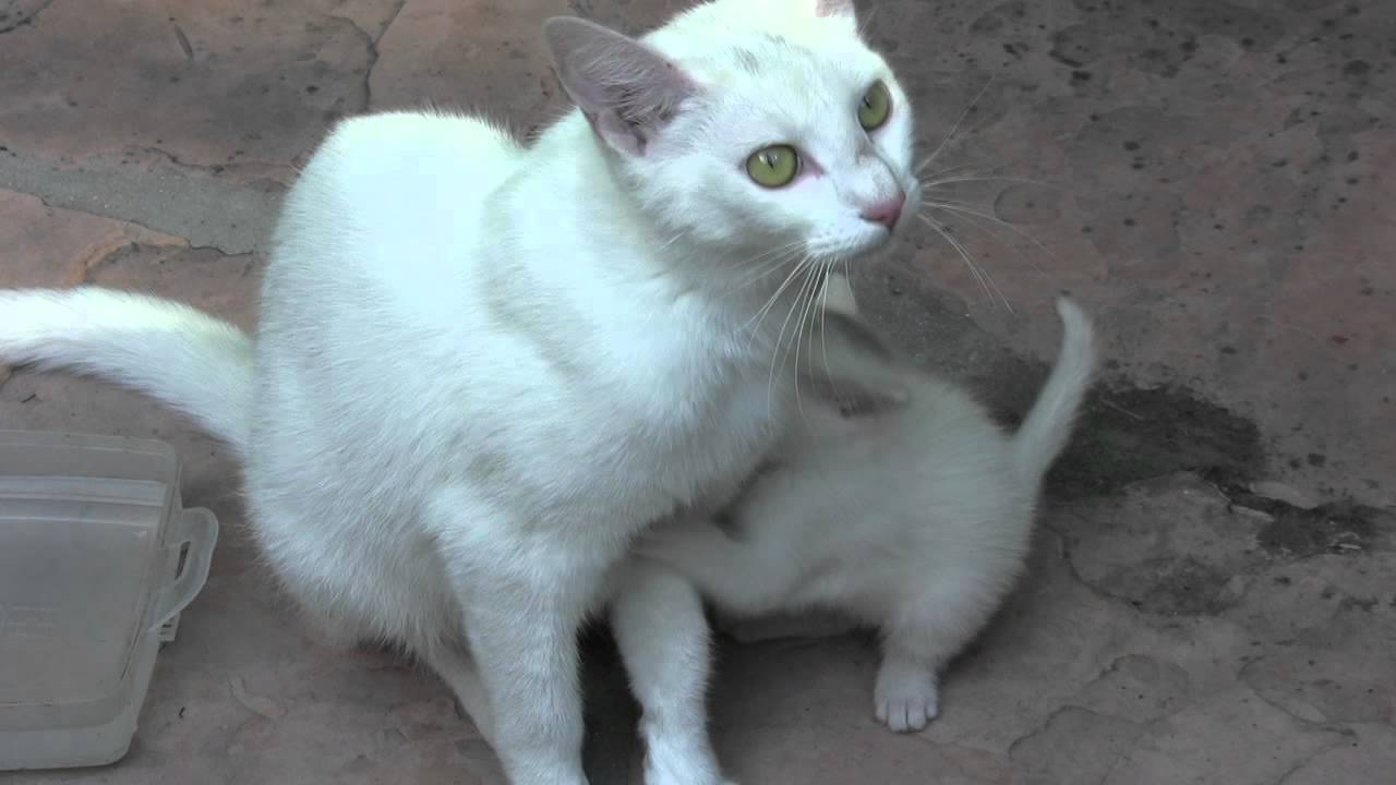 Cute Tiny Baby Kitten Hugs Kitten Mom Kitten Catchers