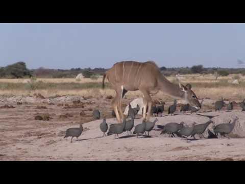 Nxai Pans - Botswana - June 2016
