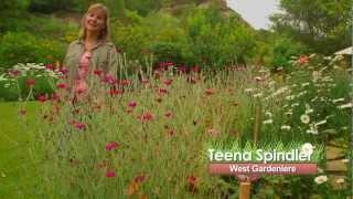 Gardenieres: The Edible Garden