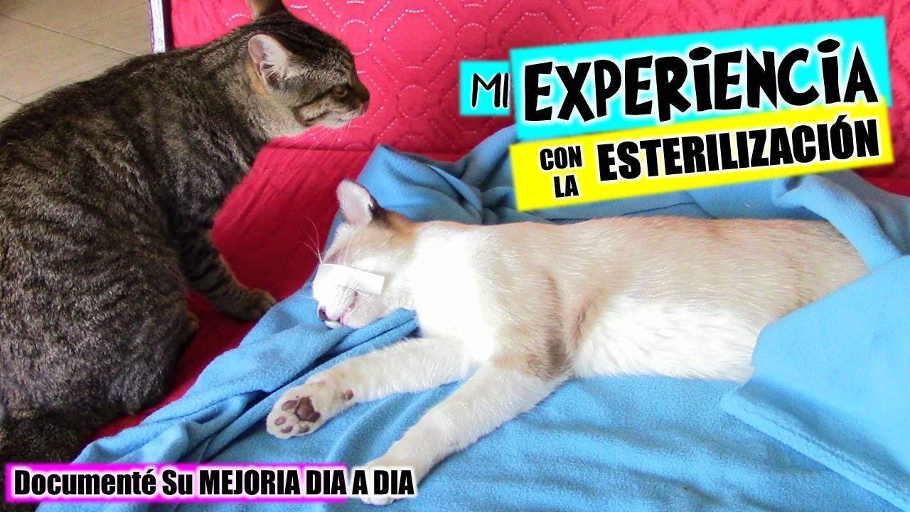 EsterilizadosDiverticats Gatos Tres Adry Y Diverticats Con Operé GatosMi Mis Recién Sus Experiencia A By D2WHIE9