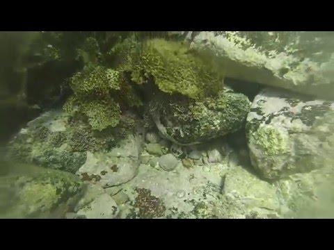 Sydney Summer - Underwater!