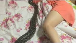 Snakes sex