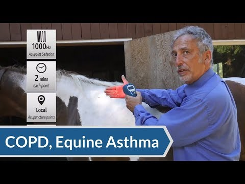 Equine Laser Therapy Protocol: Acupuncture Points for COPD