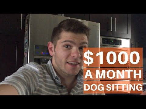 How To Make $1000 Dollars Dog Walking or Dog Sitting