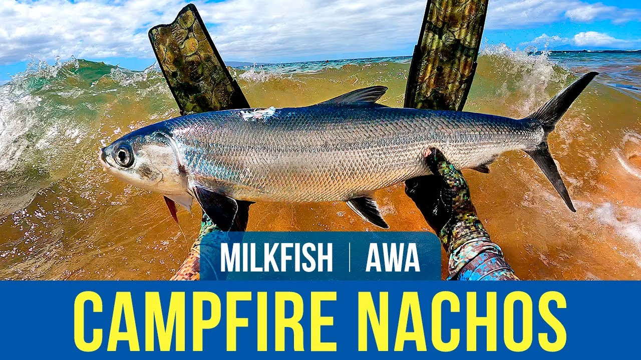 Download Campfire Fish Nachos – Milkfish Catch and Cook