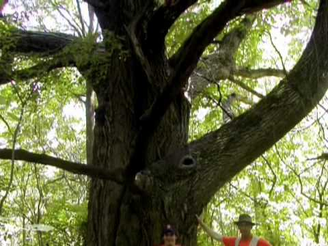 The Oaks of McHenry